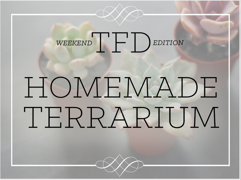 TFD_Weekend Edition_Homemade Terrarium