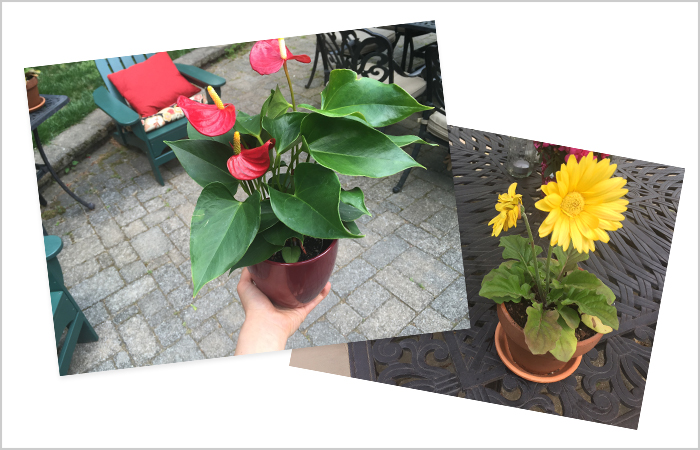 gift guide_flowers