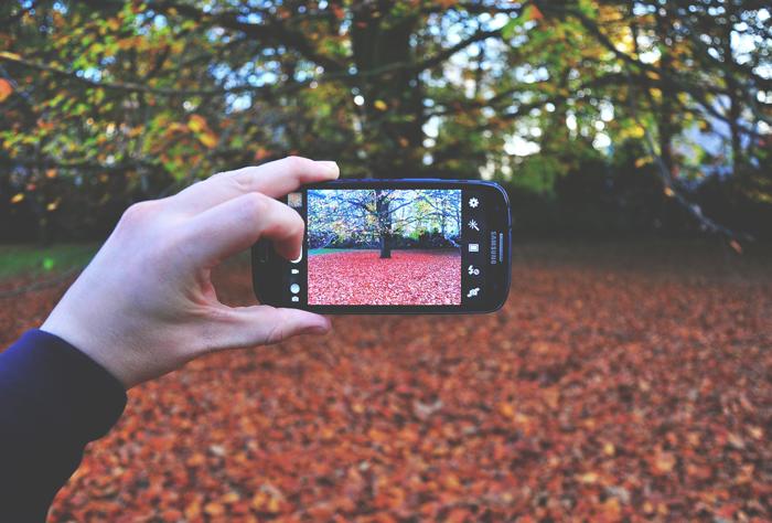 leaves-on-ground