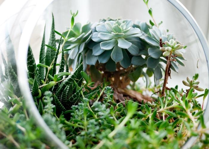 plant-plants-home-room