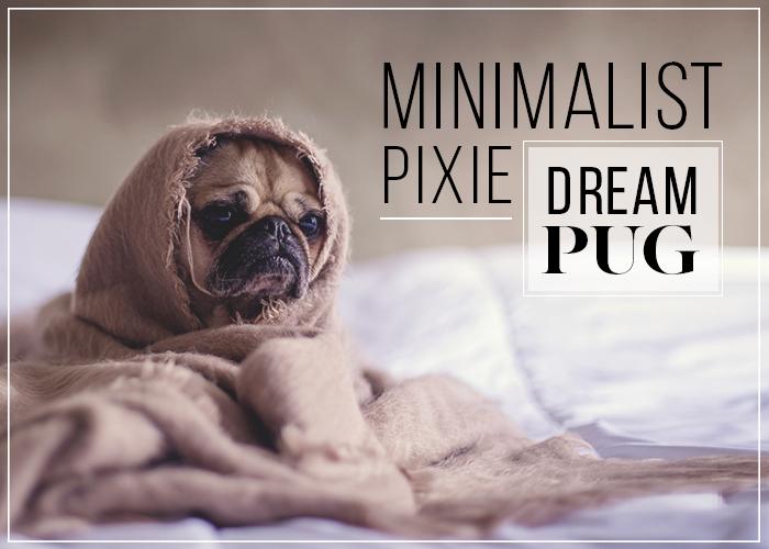 minimal-pixie-dream-pug