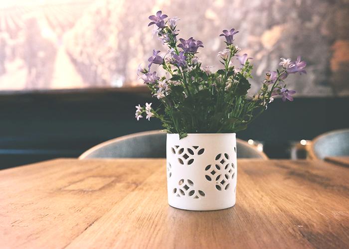 plant-on-desk