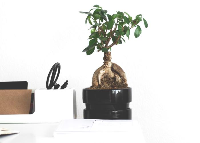 tree-in-pot-on-desk-workspace