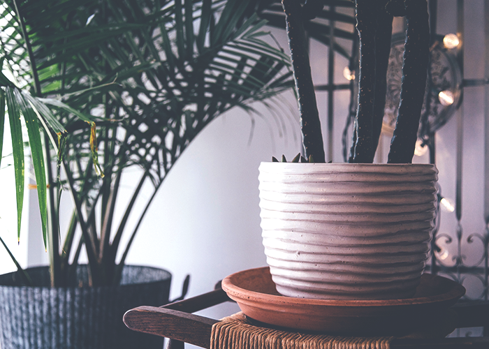tfd_cream-colored-pot-with-lush-plant