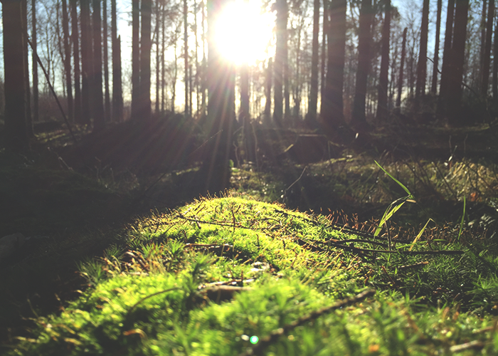 forest-floor-with-light
